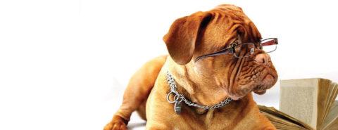 Red Barn Blog: Dog Assistant